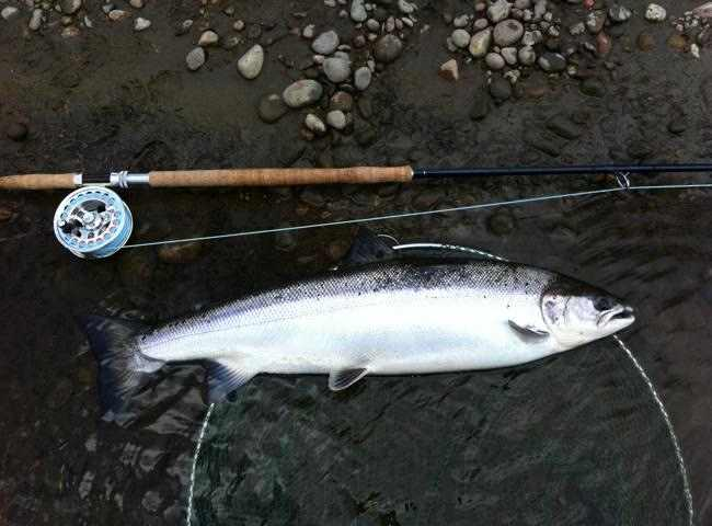 Perfect Spring Salmon On The Fly