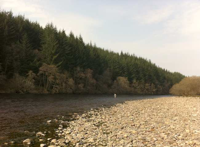 Fishing The Fly On The River Tay