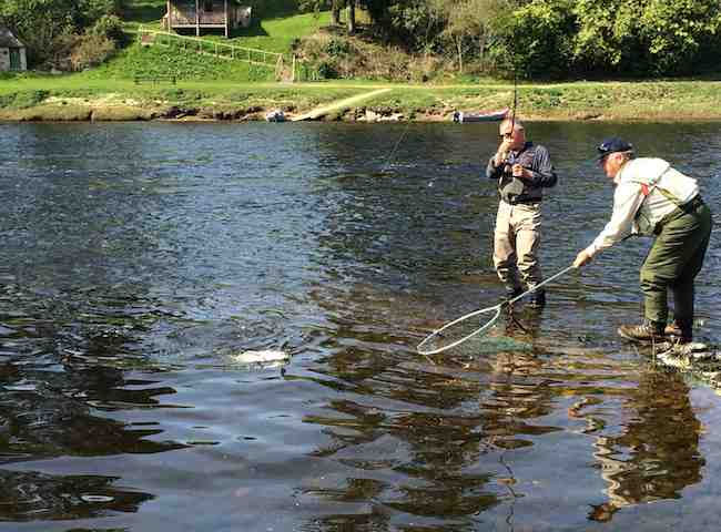 Playing A Salmon On The River Tay