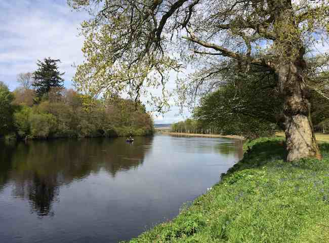 Fishing For Salmon On The Tay