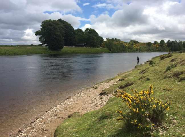 River Tay Fishing Guides