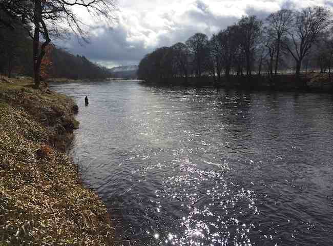 Fishing The River Tay For Salmon