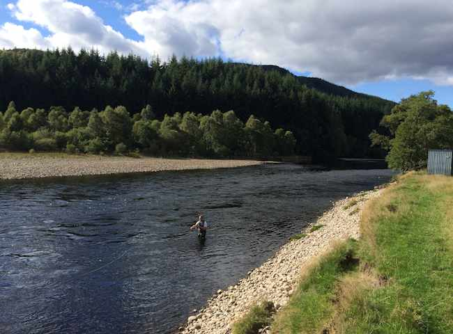 Harling For Salmon On The River Tay