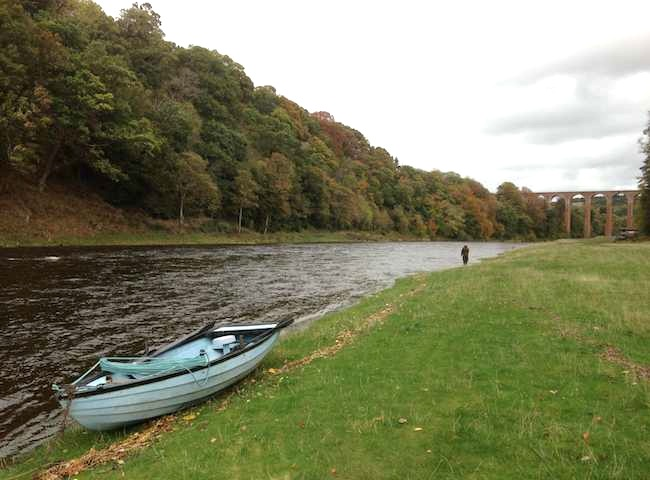River Tweed Guided Salmon Fishing