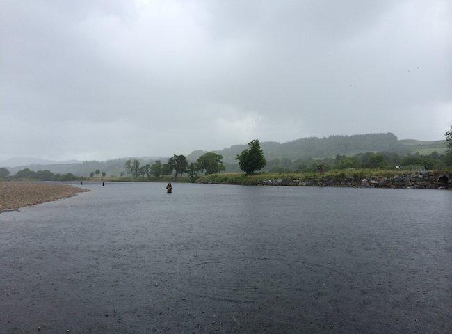 Salmon Fishing In The Rain