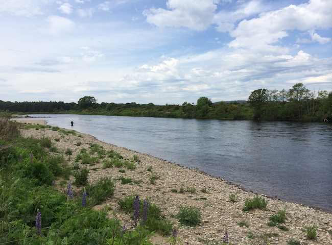 Fishing Scotland's Rivers For Salmon
