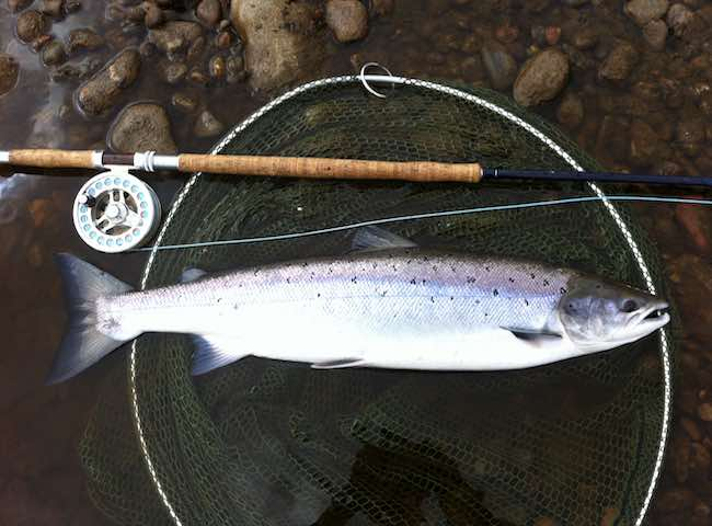Catch A Tay Salmon On The Fly