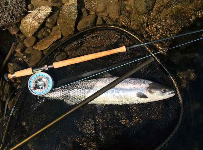 The Perfect River Tay Salmon