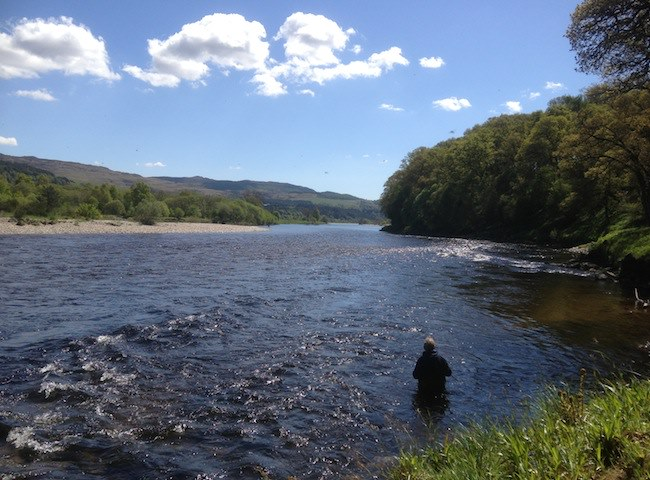 Fly Fishing On The River Tay