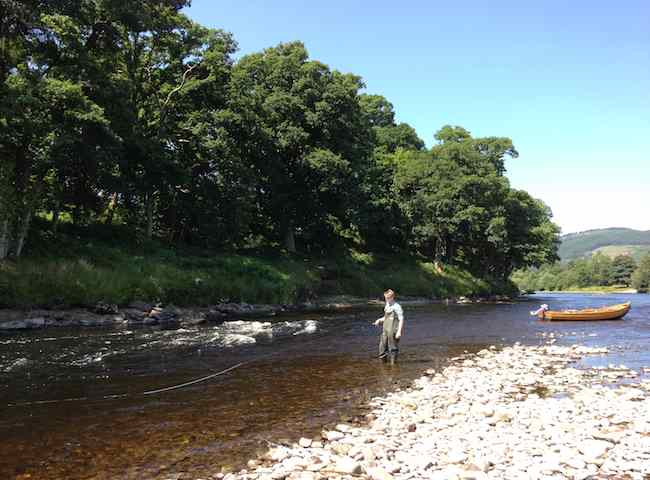 Learning To Fly Fish For Salmon