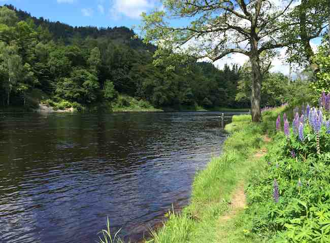 The River Tay In Springtime