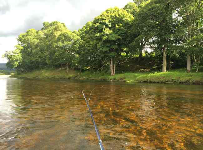 Salmon Fly Fishing Tuition