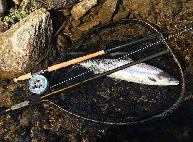 No Salmon Fishing Experience Required