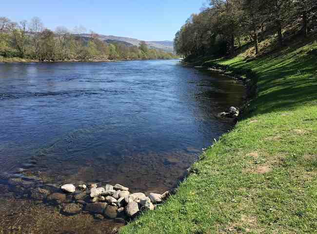 River Tay Salmon Beauty