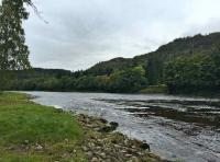 High Water Salmon Lies