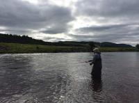 Catching A Scottish Salmon On The River Tay