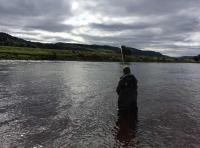Playing Salmon On The River Tay