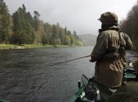Catching Salmon From The Boat