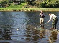 Landing A River Tay Salmon