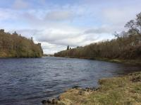 Catching Scottish Salmon On The River Tay