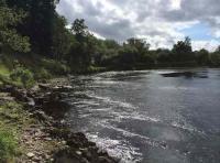 Big River Tay Salmon
