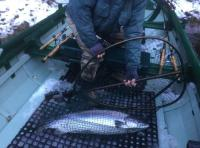 River Tay Opening Day Salmon