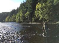 Salmon Fishing The River Tummel