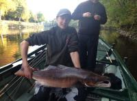 Big Scottish Salmon From The River Tay