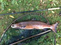 Fishing Scotland For Salmon In The Autumn