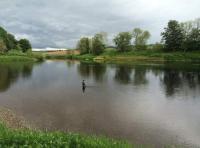 Meikleour Beat Salmon Fishing