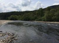 How To Read A Salmon pool