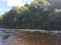 River Tay Salmon Lies