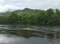Fly Fishing Scottish River For Salmon
