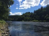 Salmon Fishing Pools Of The River Tay