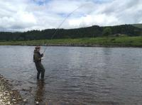 Playing A Fish On The Fly Rod