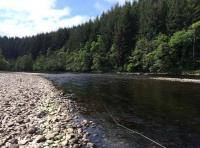 Effective Salmon Fly Fishing