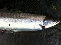 Salmon River Guides In Scotland