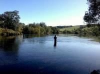Fly Fishing For Salmon In Scotland