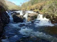Salmon Fishing River Waterfalls