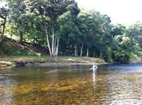 Summer Salmon Fishing Events