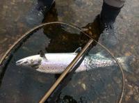 Landing Your River Tay Salmon