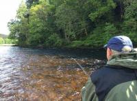 Anticipating The Salmon Take