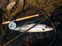 The Perfect Salmon Encounter