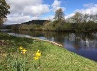 The Beautiful Scottish Riverbanks
