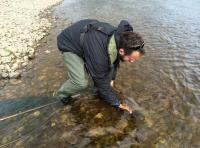 Releasing A River Tay Salmon