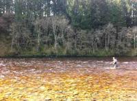 Salmon Fishing River Beauty